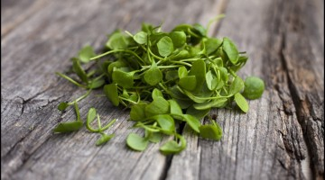 Organic Watercress on wooden floor - The health benefits of watercress