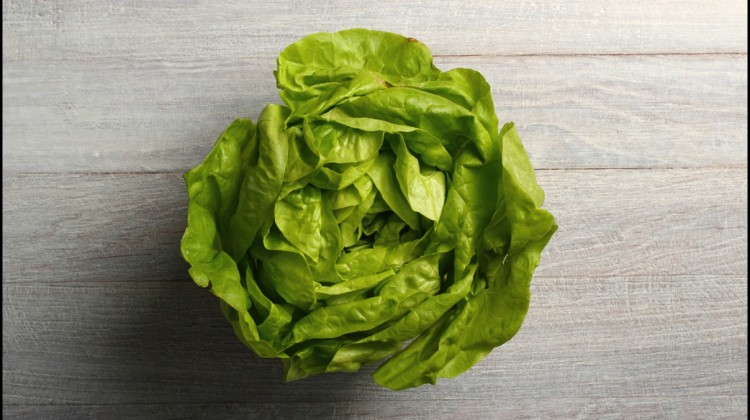 Fun Facts of Lettuce