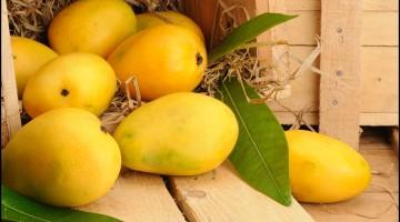 Fun Facts of Mango