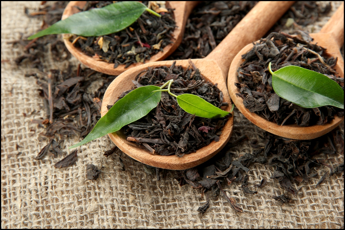 Dry black tea with green leaves in wooden spoons