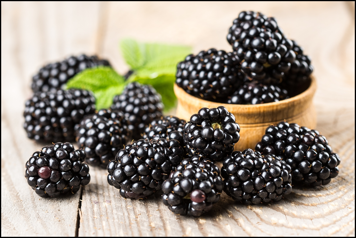 Blackberries, A Forager's Companion