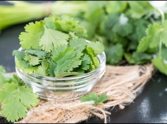 8 Amazing Health Benefits of Cilantro – Reasons Why You Should Incorporate Cilantro Into Your Daily Greens