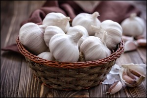 Fresh big Garlic in a wooden basket