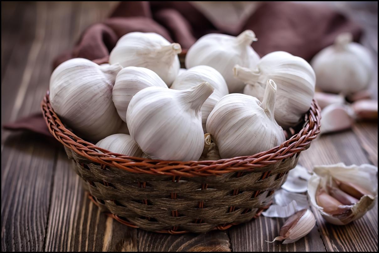 Fresh big Garlic in a wooden basket