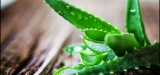 10 Vital Health Benefits of Aloe Vera Plant – Reasons Why You Should Be Using & Taking More Aloe Vera Plants
