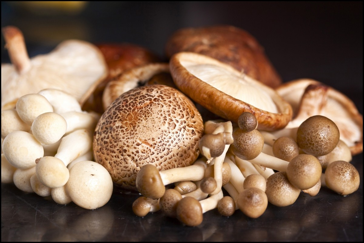 Health Beenfits of Mushrooms