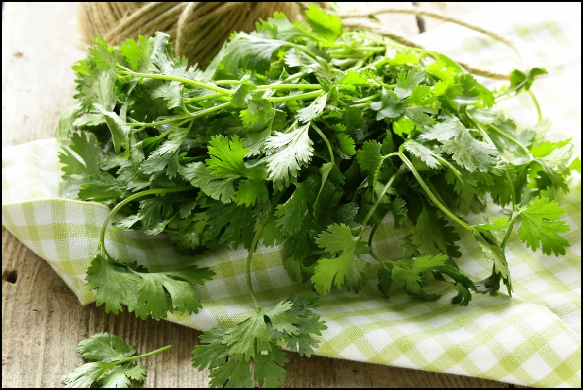 Reasons to eat Cilantro