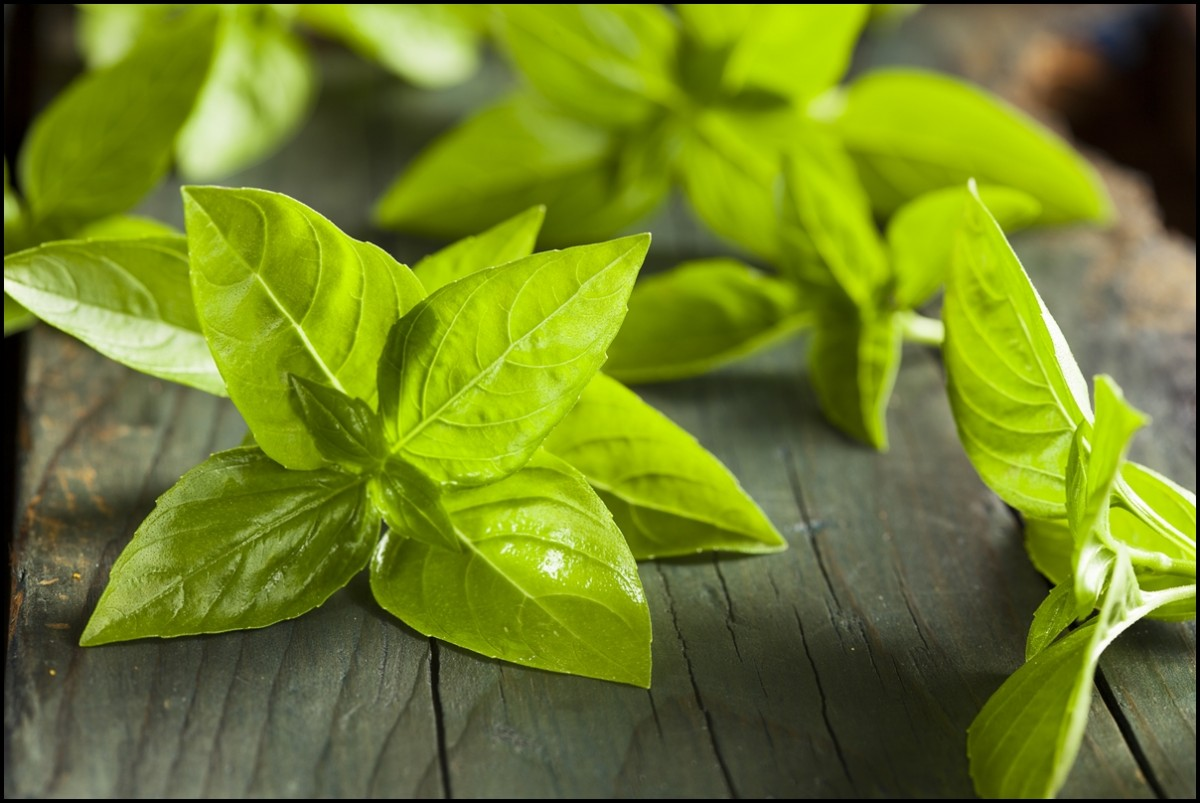 Reasons to eat basil