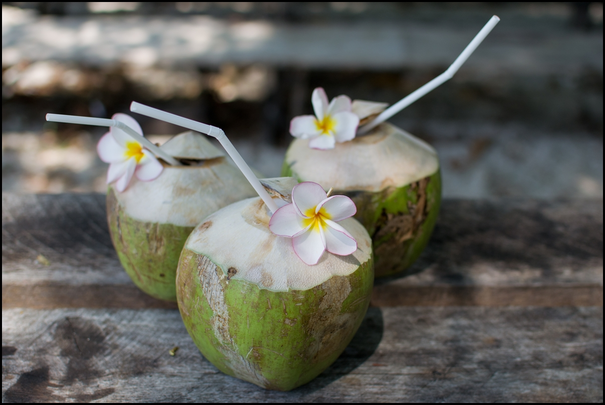 Young coconut palm with white flower on wood floor.