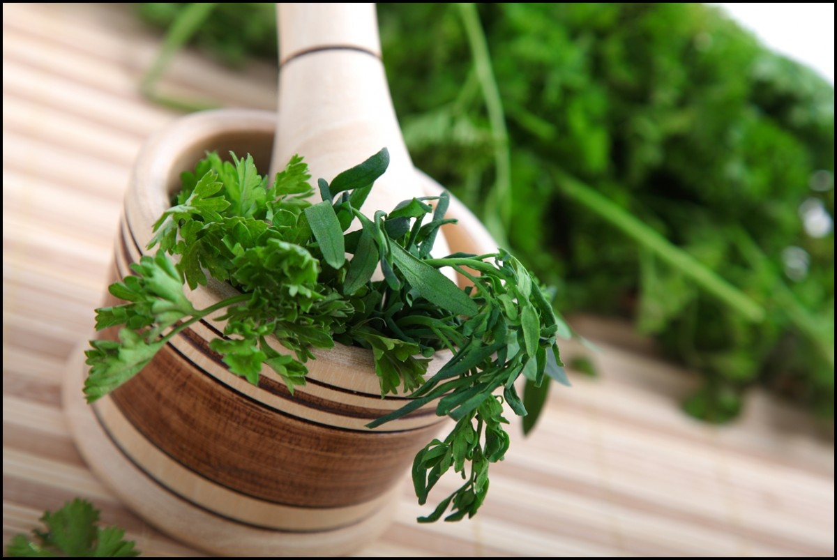 cilantro with a macerator