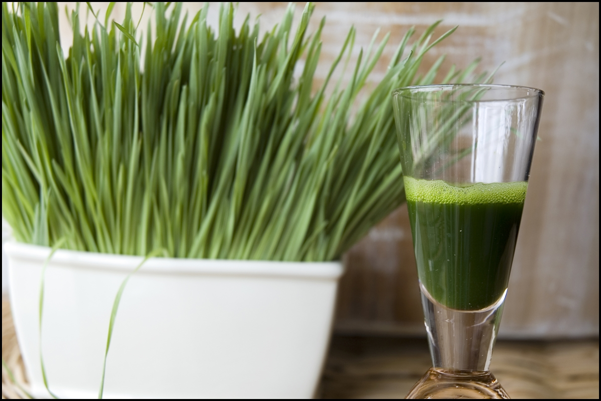 close up wheat grass juice in shot with wheat grass background