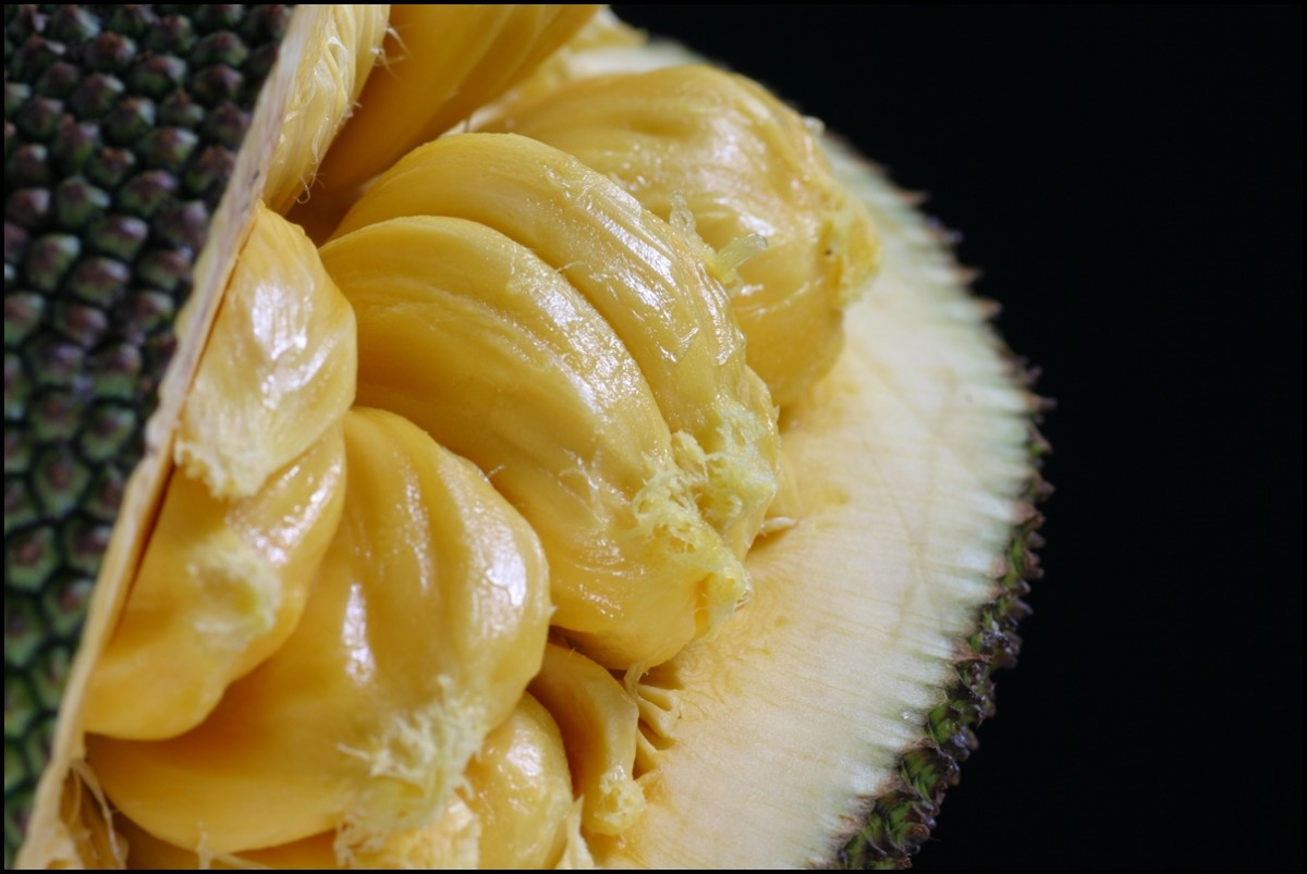 jack fruit close up