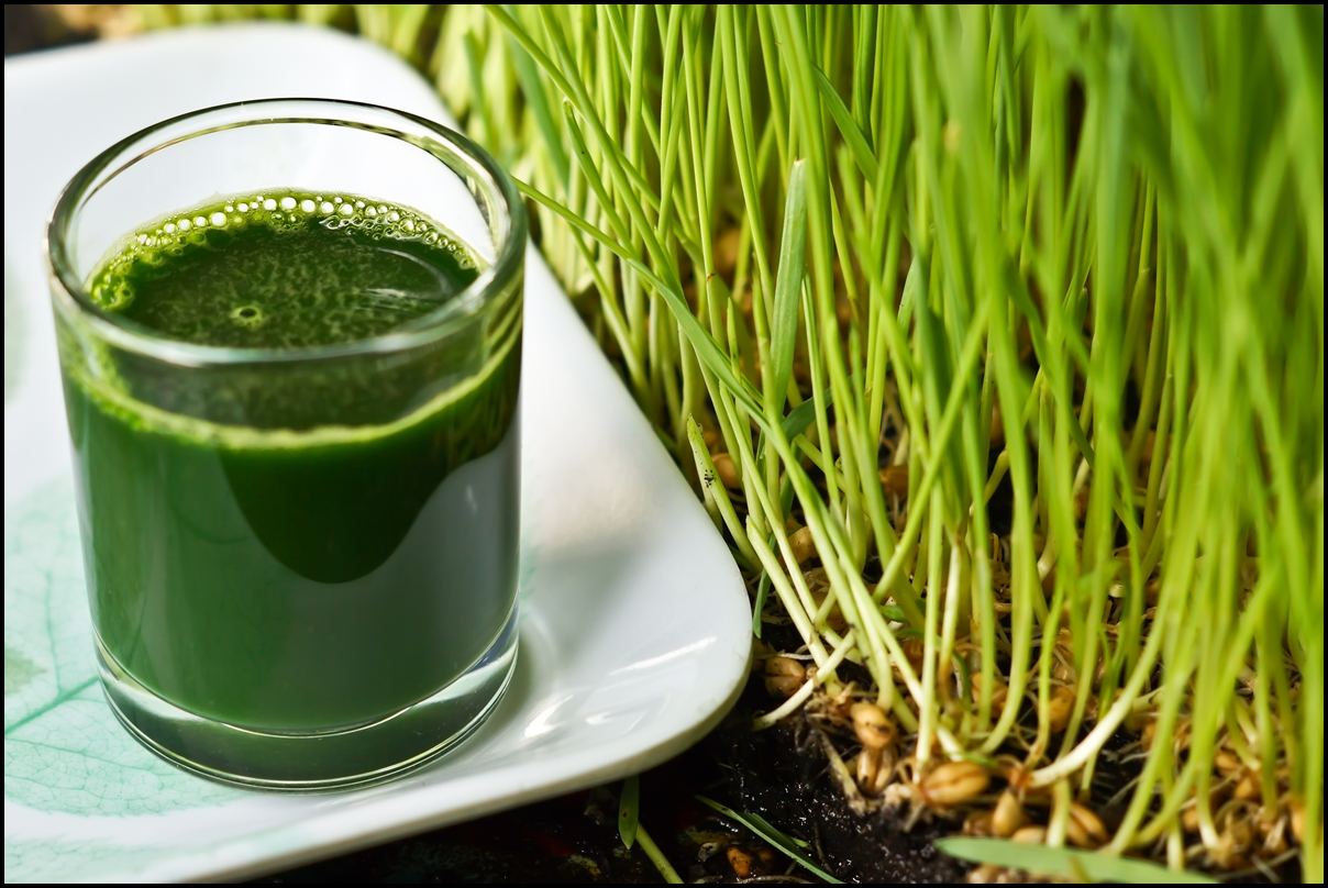 wheat grass and wheat grass drink
