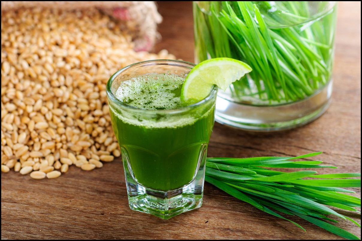 The Amazing Health Benefits Wheat Grass 9 Reasons Why