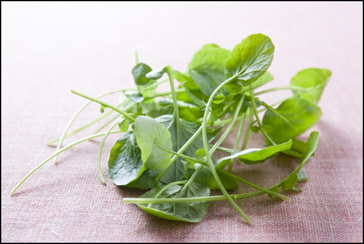 Baby Watercress close up - Reasons to eat Watercress
