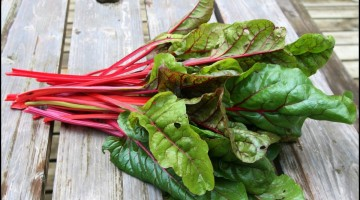 Freshly picked green and red colored swiss chard - The Health Benefits of Swiss Chard