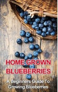 Home Grown Blueberries - A Beginners Guide To Growing Blueberries