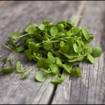 9 Amazing Health Benefits of Watercress – Reasons Why Watercress is Extremely Good For You
