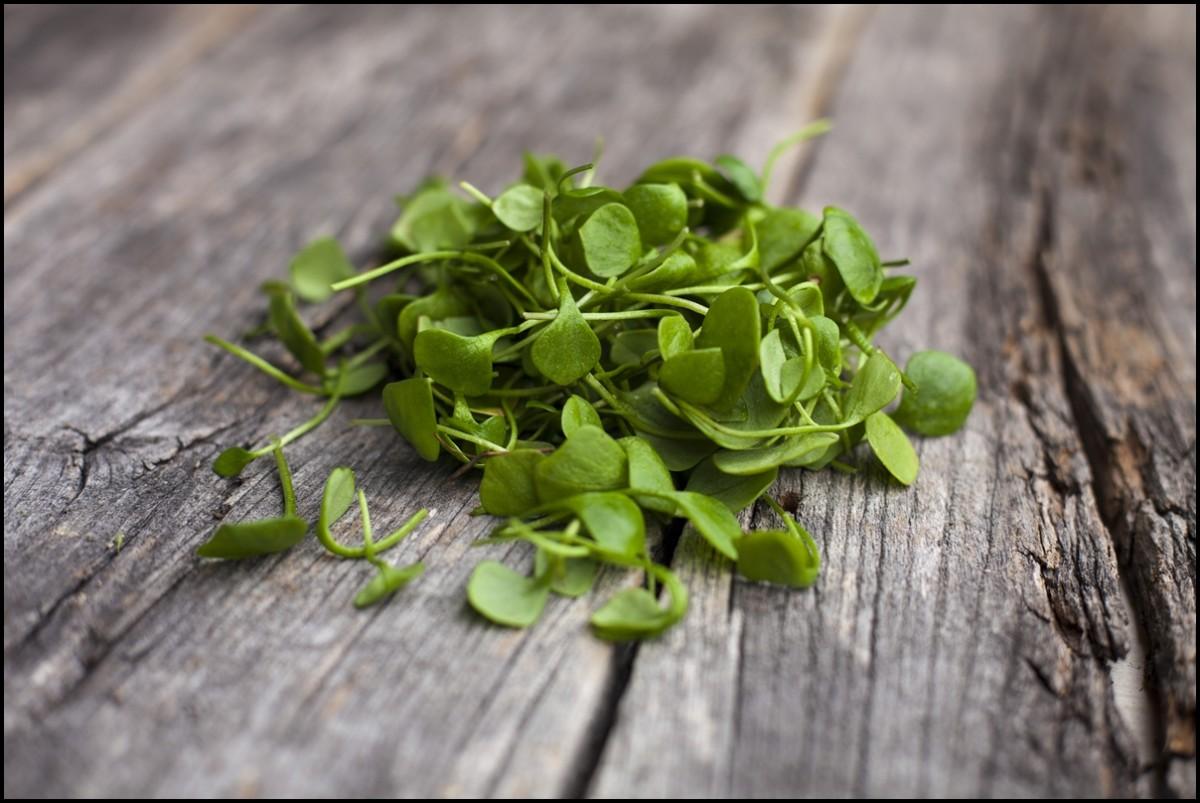 Organic Watercress on wooden floor - The health benefits of watercress