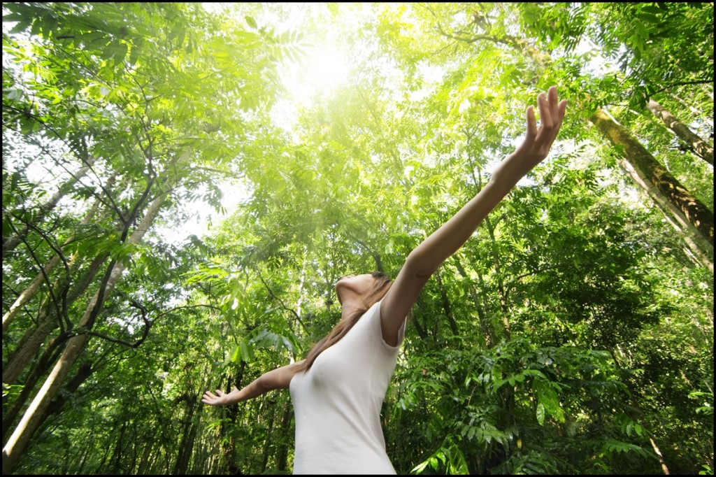 Embrace Nature - Why it is Important to Go for a Walk in Nature Once in a While
