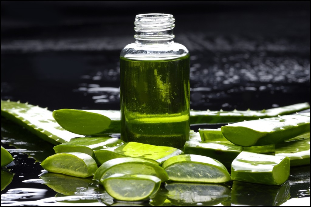 Fun Facts of Aloe Vera 2