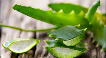Fun Facts of Aloe Vera