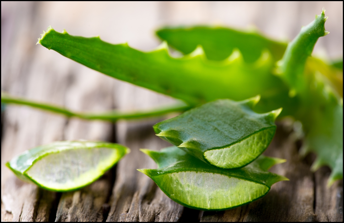Image result for aloe vera what we called in ayurveda