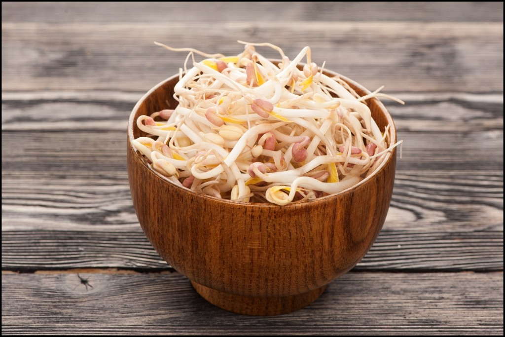 Fun Facts of Bean Sprouts 2