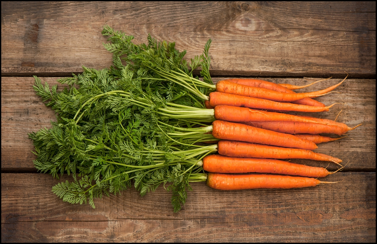 Fun Facts of Carrots 2