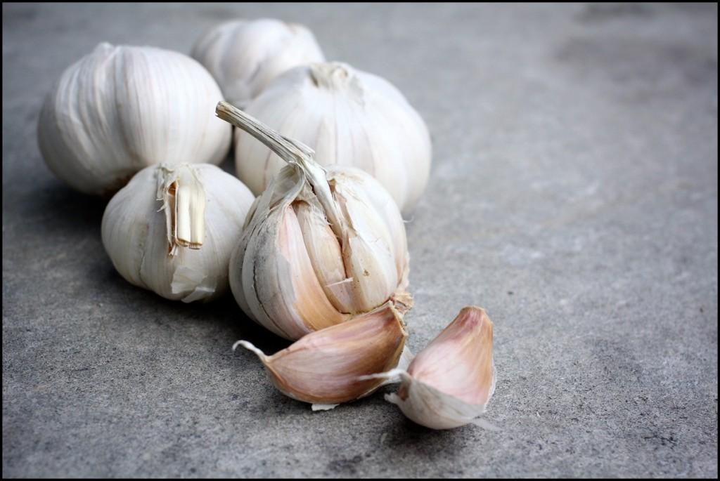 Fun Facts of Garlic