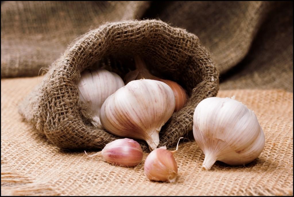 Fun Facts of Garlic 2