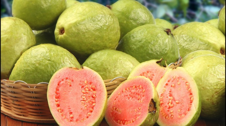 Fun Facts of Guavas