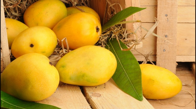 Fun Facts of Mango