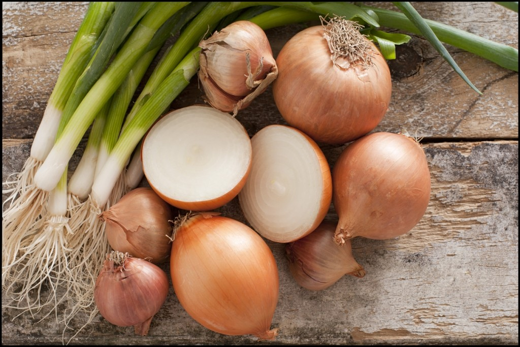 Fun Facts of Onions 2