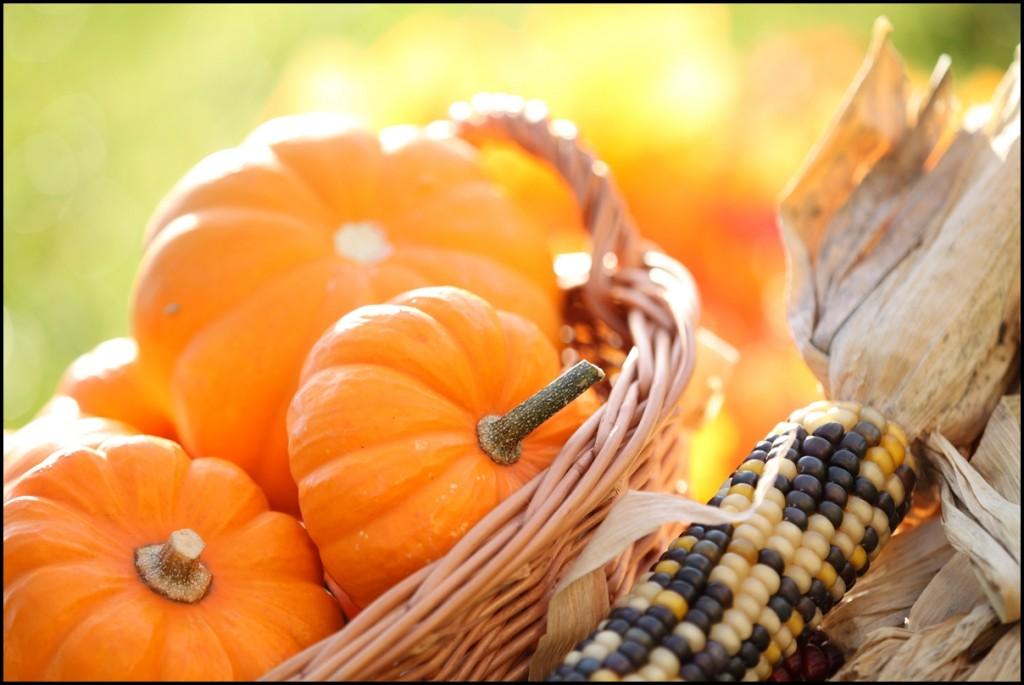 Fun Facts of Pumpkin 2