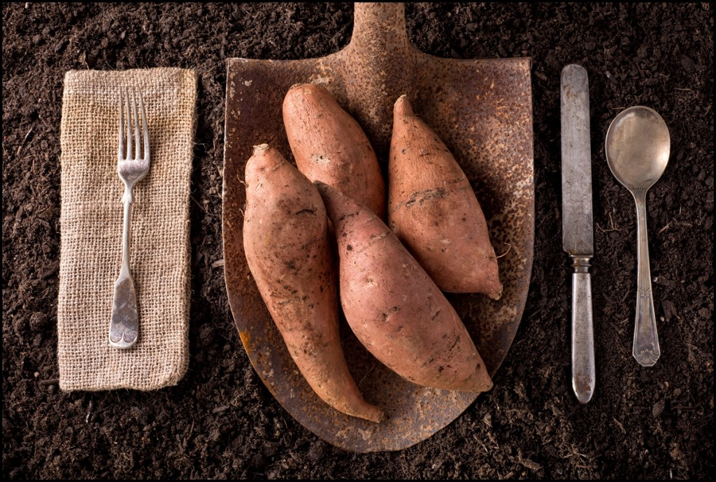 Fun Facts of Sweet Potatoes