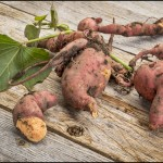 Fun Facts of Sweet Potatoes 2