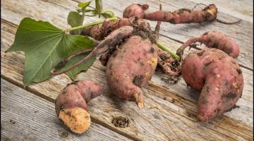 Fun Facts of Sweet Potatoes 2