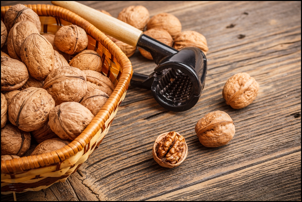 Image result for 4 Interesting Facts About Walnuts